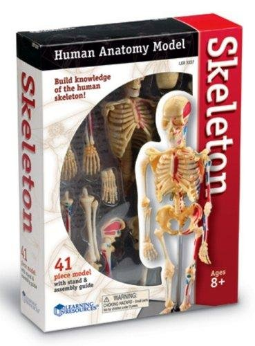 Amazon Learning Resources Skeleton Model Toys Games