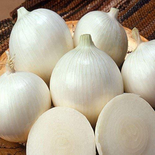 White Sweet Spanish Onion Seeds, 500+ Premium Seeds, (Isla's Garden Seeds), Non Gmo organic, 90% Germination, Highest Quality