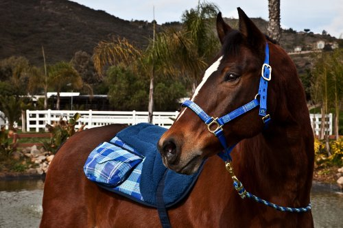Kensington KPP Halter Set with Padded Nose, Blue with Blue Ice Plaid, (Halter Ice)