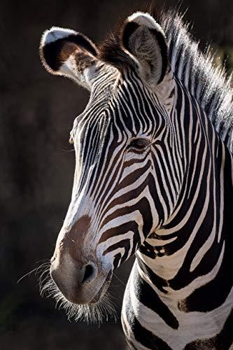 (A O Tucker Artwork - Animal - 11 x 14 - Zebra Portrait - Fine Art Photograph - Unmatted Print - Ready to Mat/Frame Nursery, Home & Office Decor)
