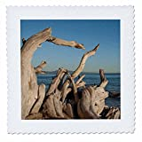 3D Rose USA California Santa Barbara Montecito Butterfly Beach Driftwood Quilt Square, 25 x 25