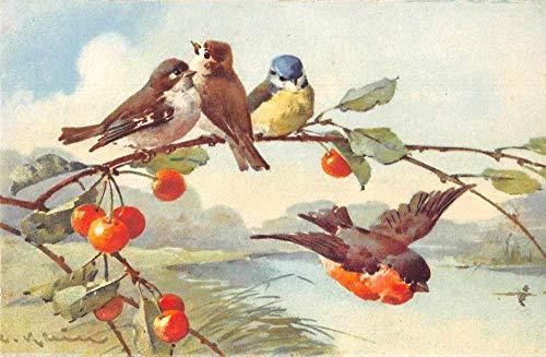 Birds on Cherry Tree Artist Signed Klein Antique Postcard J80443