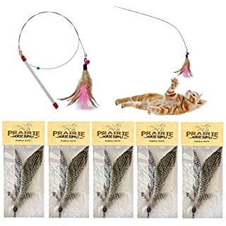 Prairie Horse Supply Replacement Feathers for Cat Wand (5 Pack) Refill for Da Bird GoCat Toy Top Choice Teaser Interactive Play for Kittens All Natural Genuine Guinea Feathers