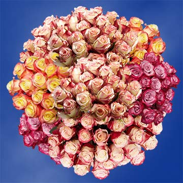 GlobalRose 50 Fresh Cut Multicolor Roses - Fresh Flowers Express Delivery - Perfect For Valentine