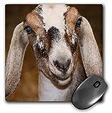 3dRose LLC 8 x 8 x 0.25 Inches Mouse Pad, Nubian Dairy Goat Doe White Stripe Caprine Sq (mp_156065_1)