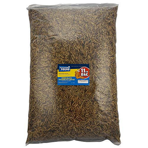 (Mealworms by the Pound MBTP Bulk Dried Black Soldier Fly Larvae - Treats for Chickens & Wild Birds (11 lbs))