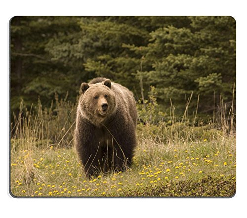 luxlady-gaming-mousepad-large-grizzly-shot-in-jasper-national-park-image-id-2249826