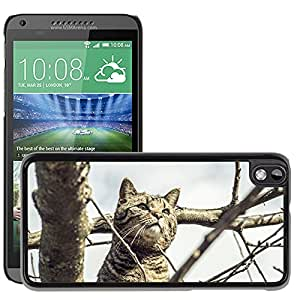 Hot Style Cell Phone PC Hard Case Cover // M00115528 Cat Pride Nature Mackerel Pet // HTC Desire 816