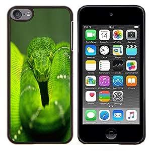 Jordan Colourful Shop - Snake Green Nature Rainforest Reptile Tail For Apple iPod Touch 6 6th Generation Personalizado negro cubierta de la caja de pl????stico