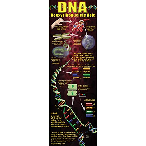 McDonald Publishing MC-V1652 DNA Colossal Concept Poster, 17.7