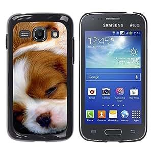YiPhone /// Prima de resorte delgada de la cubierta del caso de Shell Armor - Cavalier King Charles Spaniel Puppy - Samsung Galaxy Ace 3 GT-S7270 GT-S7275 GT-S7272