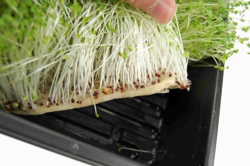 Micro mats hydroponic grow pads for organic production for Indoor gardening market size