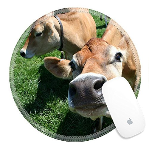 Luxlady Round Gaming Mousepad 449913 A beautiful female Jersey cow in pasture exploring the camera