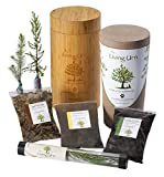 The Living Urn 100% Natural Tree Urn and Planting System for Pets Including an Evergreen Tree Seedling (Choose Between a Pine, Evergreen, and Cypress Tree)