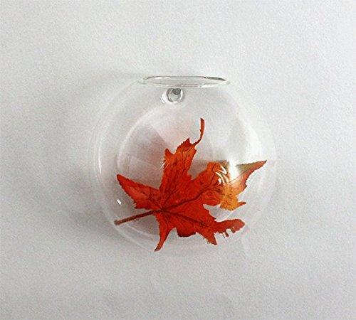 WGV Clear Half-Round Wall Hanging Terrarium/Glass Vase, 5 by 3.3-Inch by WGV International
