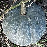 buy NIKITOVKASeeds - Pumpkin Zimnyaya Sladkaya - 20 Seeds - Organically Grown - NON GMO now, new 2019-2018 bestseller, review and Photo, best price $5.49