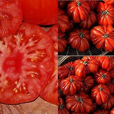 QiBest 50PCS Perennial Bonsai Mini Tomato Seeds Bonsai Indoor Plant Seeds Fruits : Garden & Outdoor