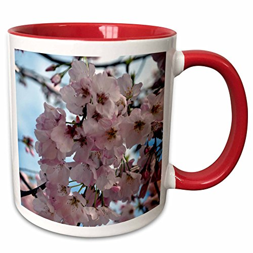(3dRose ET Photography - Flowers - Yoshino Cherry Blossoms A Georgia flowering tree in the spring - 15oz Two-Tone Red Mug (mug_127784_10))