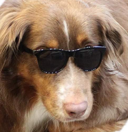 G002 Dog 80s Retro dorky pet Sunglasses for Medium to Large Dogs 20lbs & Over (Black-dark lens, UV400) ()