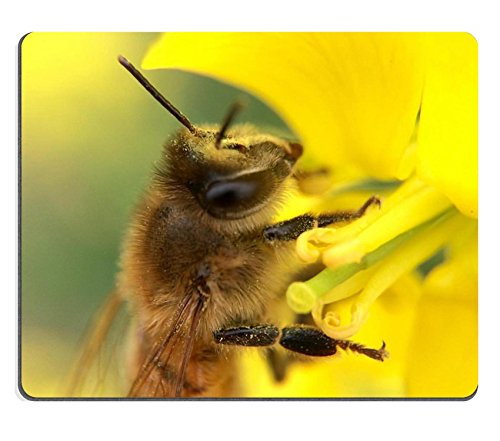 luxlady-mousepad-28-spotted-potato-ladybird-beetle-natural-rubber-material-image-25118801453