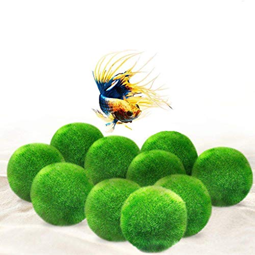 Luffy 10 Marimo Moss Balls - Jumbo Pack of Aesthetically Beautiful Plants - Create Healthy Environment for Aquatic Pets - Low Maintenance Live Plant - Shrimps & Snails Love Them