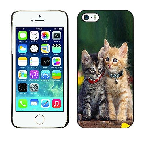TaiTech / Case Cover Housse Coque étui - Cute Baby Kitten Cat Green Furry Pet - Apple iPhone 5 / 5S