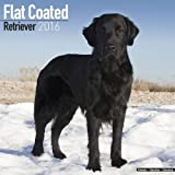 Flat-Coated Retriever Calendar - Breed Specific Flat-Coated Retriever Calendar - 2016 Wall calendars - Dog Calendars - Monthly Wall Calendar by Avonside