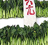 250 Choy Sum Brassica Vegetable Seed Seeds TSOI SIM CHOY SIM ~ EXCELLENT FLAVOR by MySeeds.Co