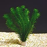 Anacharis Egeria Elodea Densa Beginner Tropical Live Aquarium Plants Java Moss