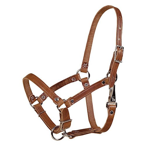 Tory Safety Rivet Foal Leather Halter with - Foal Newborn