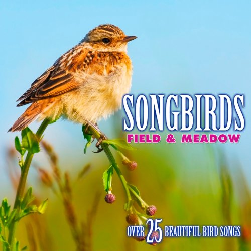 Bird Sounds - Songbirds: Field & Meadow - Over 25 Beautiful Bird Songs & Sounds