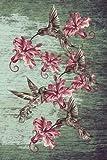 Journal: Hummingbirds (Green) 6x9 - LINED JOURNAL - Journal with lined pages - (Diary, Notebook) (Birds & Buttterflies Lin...