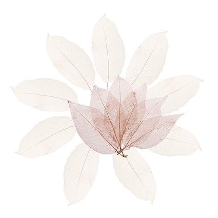 Decorazioni Natalizie Con Foglie Di Magnolia.Baoblaze 100pcs Naturale Foglie Di Scheletro Di Foglie Di