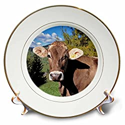 3dRose cp_82188_1 Italy, Dolomite Alps, Swiss Brown Cow EU16 RER0140 Ric Ergenbright Porcelain Plate, 8-Inch