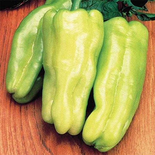 500 Seeds of Biscayne Hybrid Pepper - Capsicum Annuum