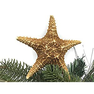 Caribbean Starfish Christmas Tree Topper 28