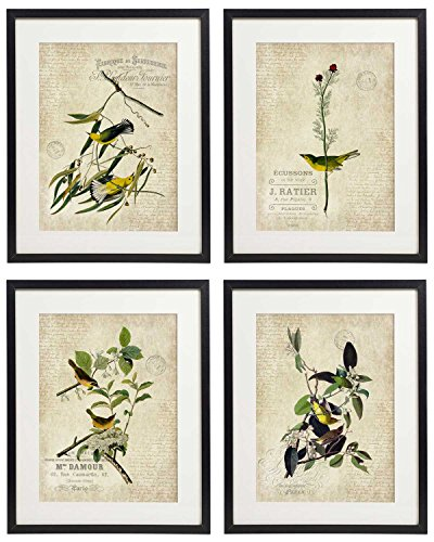 IDIOPIX Vintage Bird & Botanical Home Décor Wall Art Print No.2 Set of 4 Prints UNFRAMED