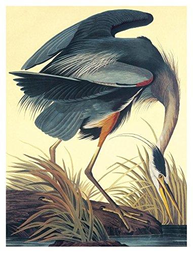 "Global Gallery ""John James Audubon Great Blue Heron"" Unframed Giclee on Paper Print, 40"" x 30"" from Global Gallery"