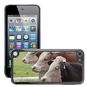 Etui Housse Coque de Protection Cover Rigide pour // M00111675 Ganado Femenino vaca Ganado domesticado // Apple ipod Touch 5 5G 5th