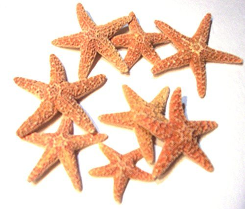 (DecorLand Brown Sugar Starfish 2