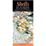 Shells of Florida-Gulf of Mexico: A Beachcomber's Guide to Coastal Areas