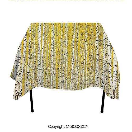 SCOXIXI Banquet Tablecloth Washable Polyester Fabric,Autumn Season in Birch Forest Golden Leaves Seasonal Scenics Picture,W55XL55 Inches from SCOXIXI