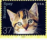 POSTCARD - NEUTER SPAY CATS