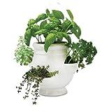 Windowsill Herb Garden Kit