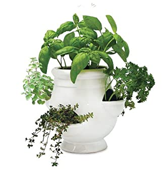 Amazoncom Windowsill Herb Garden Kit Patio Lawn Garden