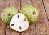 Nianyan Chirimoya Annona Cherimola Custard Apple Seeds 10 PCS
