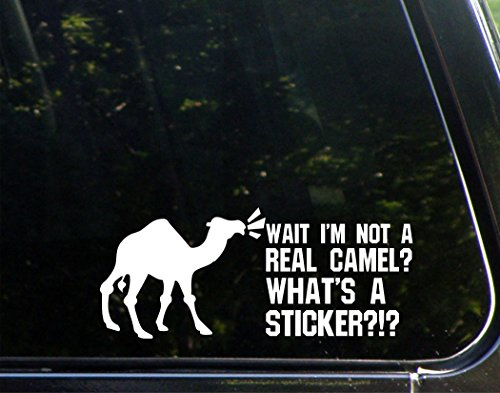 Wait I'm Not A Real Camel? What's A Sticker?- 8-3/4