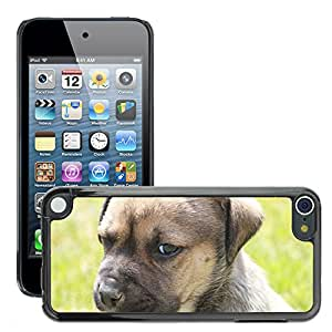 Hot Style Cell Phone PC Hard Case Cover // M00117368 Dog Animal Brown Fur Portrait // Apple ipod Touch 5 5G 5th