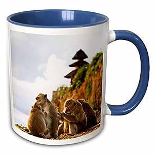 3dRose Danita Delimont - Monkeys - Bali, Indonesia, monkeys run in the Uluwatu temple-AS11 MWR0067 - Micah Wright - 11oz Two-Tone Blue Mug (mug_73517_6)
