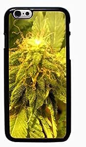 Marijuana Kush Weed Hard Case for Apple iPhone 6 6G 4.7 ( Sugar Skull )